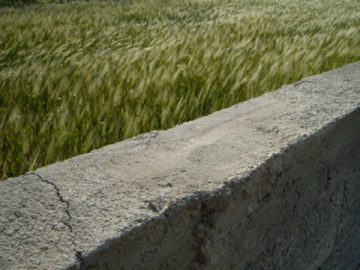 santorini-perissa-wheat